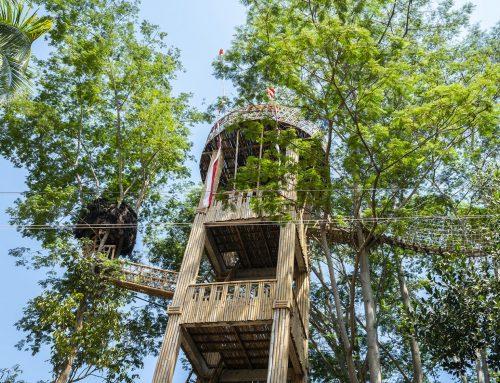 Memanjati Ranting & Dahan di Rumah Pohon Bukit Lemped Bali